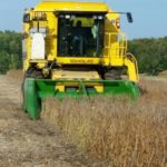 TR89 harvesting soybean yield trials